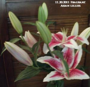 Asian Lillies- fragrant